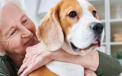 Pets and estate planning: Who will care for Fido when you're gone?